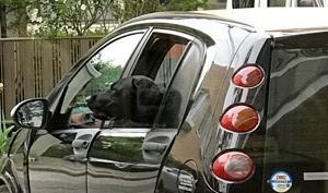 納得の飼い主と納得できない黒い犬の、かわの話。