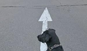 自動運転が見据える方向と黒い犬が見据える方向。