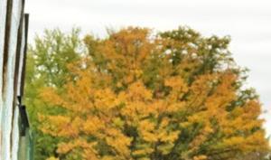 紅葉と言えば聞こえはいいが、単に草木が枯れているだけなのであーる。