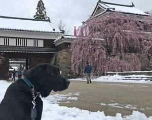はしゃぐ犬。疲れる飼い主。突然の石川啄木。