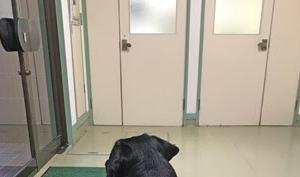 股間がかゆいニコさんは、デリケアエムズではなく再び抗生剤のお世話になります。