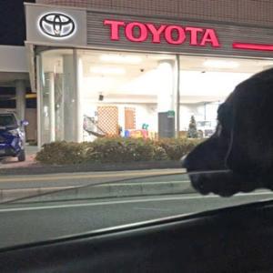 選択肢を与えてくれる医療に感謝。選択肢を与えてあげられない黒い犬に陳謝。