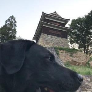 犬越しにいろんな風景を撮っても、その写真を使う基準は結局犬が可愛く撮れてるかどうか次第。