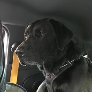 ある初秋の午後車の中で、黒い取締役が静かに運転手へ注意と指示を与えていた。
