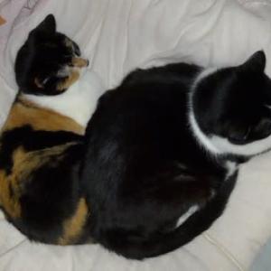 そろそろ猫団子の季節?
