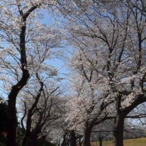 今回は季節の花特集、で、ちょっとニャンコ。
