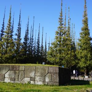 神宮外苑のイチョウ並木、まだまだ当分黄葉はなさそう!、木曜日はまだミドリ緑だった