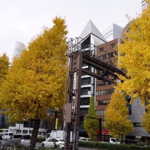 黄葉、西新宿、甲州街道、文化学園前のイチョウ並木の黄葉は見ごろに!