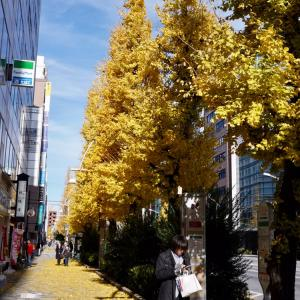 銀座線・末広町駅、イチョウ並木がみごとに黄葉している、さざれ石