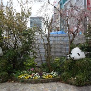 外出自粛?!、電車ガラ空き、上野公園、桜は満開だった、自粛要請で休業した店の損失補填は?!