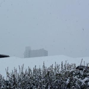 4月の雪、積雪量は6センチだった!、8時に降り始めて13時半に雪はやんで曇りとなった