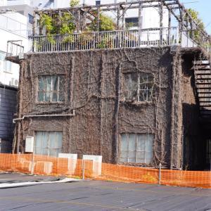 蔦の絡まる建物、南青山5丁目、展示会場、LIGHT BOX STUDIO