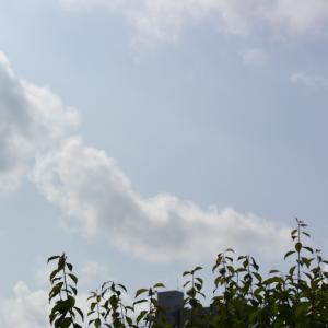 朝8時の東の空、夏日が6日もあった1週間、洗濯日和が外れた木曜日