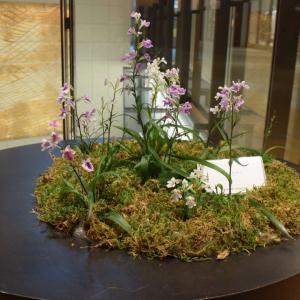 ウチュウラン、野生の蘭、美しい小さな花、東京ミッドタウンで見かけた