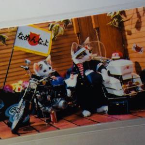 なめ猫、「全日本猫連合会 なめんなよ」、1981年に名古屋で誕生、今だったら動物虐待だろう!