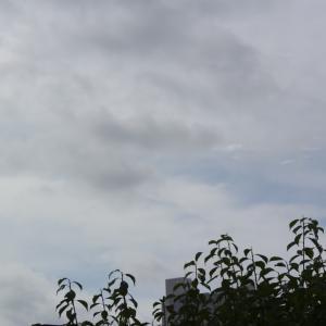 朝8時の東の空、すっきりしない天候の1週間、土曜日に唯一の真夏日