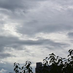 朝8時の東の空、長い梅雨がやっと開けた8月1日、暑さが襲来の8月はきつい