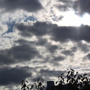 朝8時の東の空、珍しく雨が降らない1週間、みごとな青空が続いた
