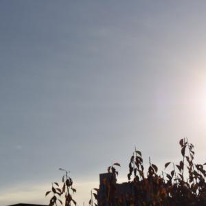 朝8時の東の空、気温の乱高下があった1週間だった、庭の木を切った