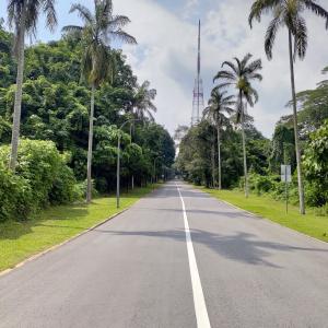 シンガポール ブキバト自然公園での日本人母子無理心中の検視官報告