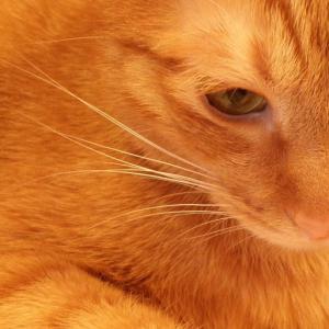 【猫カフェ写真】ねこ・BAR・カフェにて