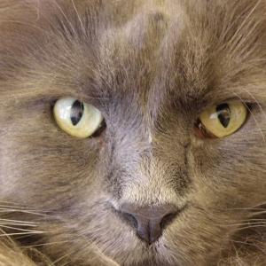 猫カフェ 6月ごろの写真