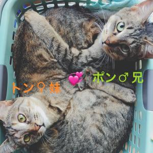 2/10譲渡会 参加猫の紹介①