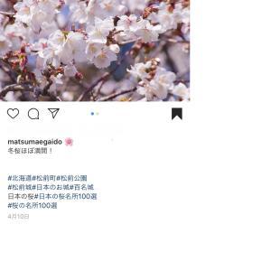松前町の桜が開花!!