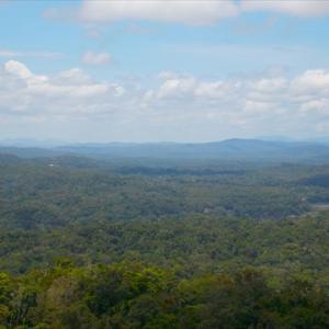 オーストラリア1周旅行(ケアンズ・キュランダの世界遺産熱帯雨林・グリーン島)