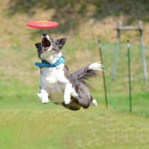 DISC DOG RELAY 2020(KYUSHU&SHIKOKU)