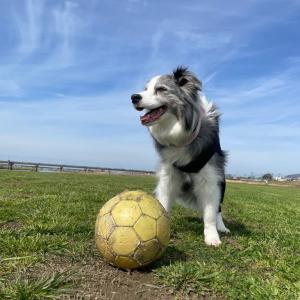 らむばあちゃん サッカーボールを見つけたよ