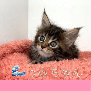 ❁¨̮ご家族募集の子猫たち❁¨̮