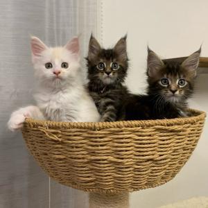 子猫のご家族募集をはじめます❁*·⑅