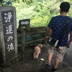 九十九折〜 浄蓮の滝♪