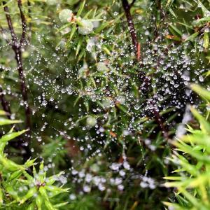 蜘蛛の巣+霧雨=宇宙、だ!