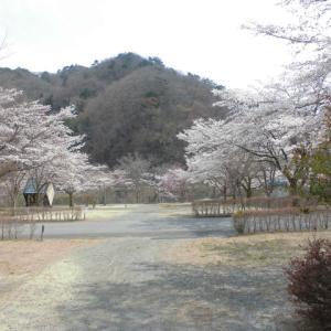 桜とお二人