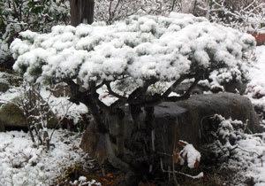雪が降る・・・