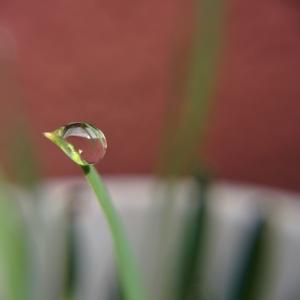 【梅雨の不調】咳が出る