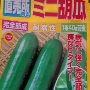ミニトマトとキュウリとパセリの栽培。