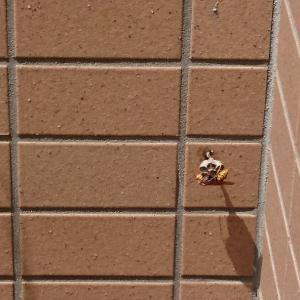 今年も蜂の巣発見・・・。
