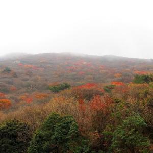 くじゅうの紅葉と臼杵の竹ぼんぼり 2019/11/3