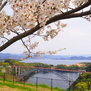 満開! 西海橋の桜