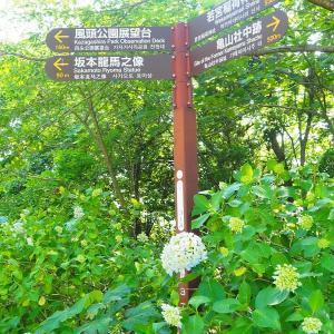 あじさい咲く 龍馬像のある風頭公園 ~眺望遮る雑木林伐採~ 2020/6/7