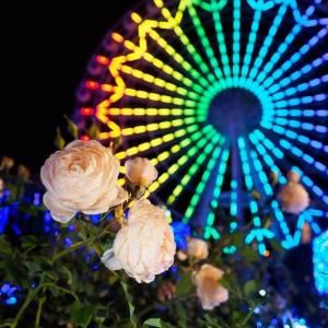 『秋バラ』ライトアップ  ハウステンボス 2020/11/21