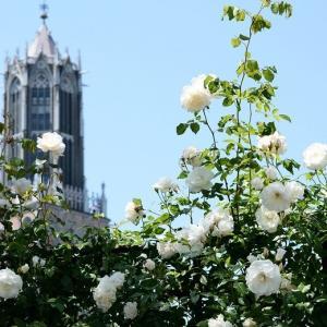 ハウステンボスのバラ祭・2021 その4 ~白いバラ&カーネーション~