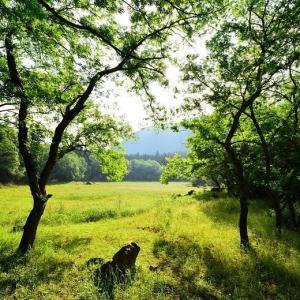 緑鮮やか!五蔵森林公園 ~幻の池には出会えず~