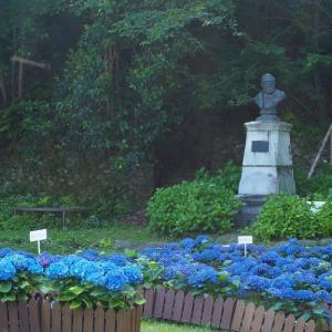 長崎アジサイ巡り・鳴滝町のシーボルト記念館