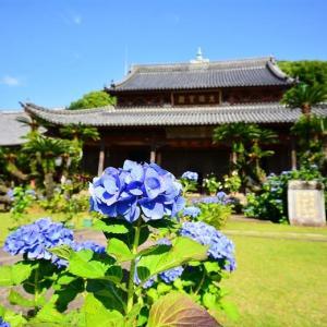長崎アジサイ巡り・写真展開催中の興福寺 ~黄檗文化伝来の地~