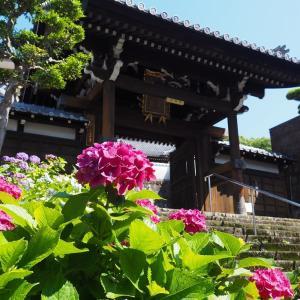 長崎アジサイ巡り・寺町の三宝寺