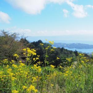 絶景!琴海赤水公園でオミナエシ咲く ~秋の七草~